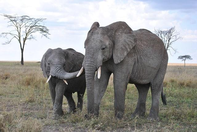 Reise Tansania Urlaub