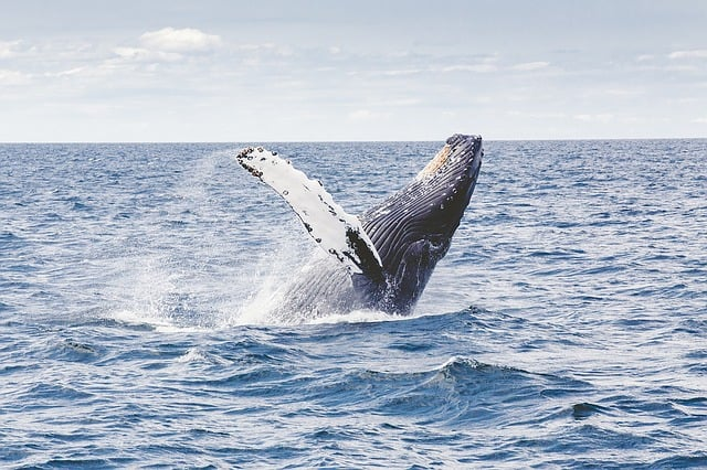Whale Watching Reise Urlaub
