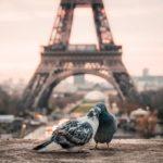 Billigflug Hamburg Paris – Sicher und günstig reisen